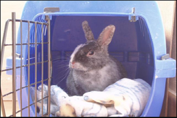 Mejor transportín para conejos