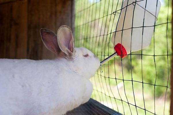Entorno adecuado para conejos