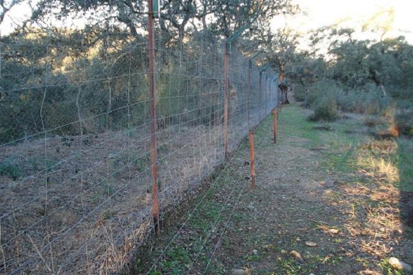 Ventajas de una cerca para conejos salvajes