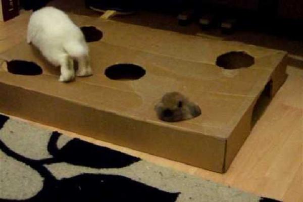 Materiales que se utilizan para jugar con los conejos