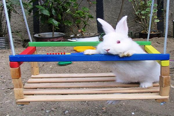 Cómo jugar con los conejos