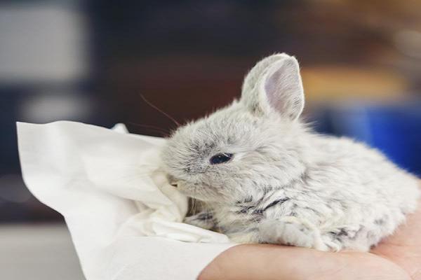Los problemas respiratorios del conejo
