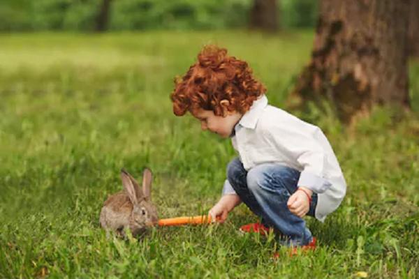 Niño alimentando a su conejito
