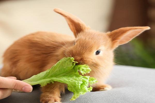 Plantas tóxicas para conejos