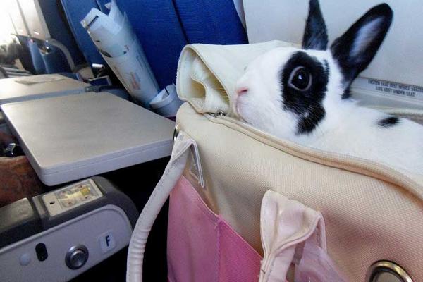 Cómo deberías transportar un conejo