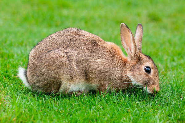 Cada cuanto debo bañar mi conejo