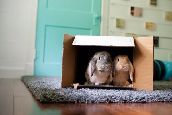 ¿Cómo bañar a un conejo en casa?