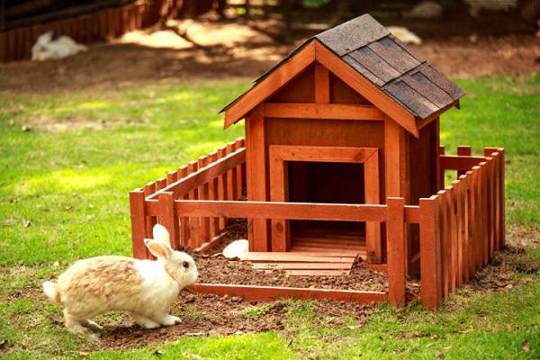 Es recomendable una casa de madera para conejos