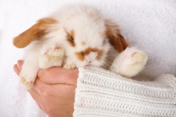 Como cuidar a tu conejito