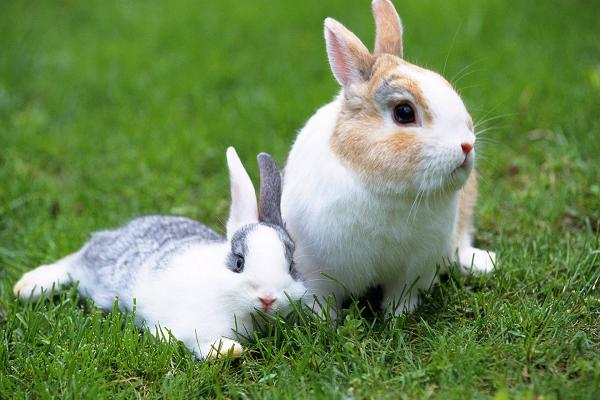 ¿Cuánto tiempo tarda en morir un conejo?