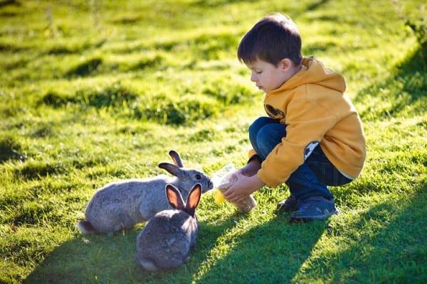 Jugando con los conejos