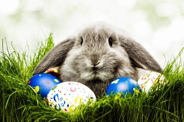 ¿Qué tiene que ver el conejo y los huevos con la Pascua?