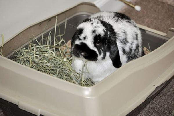 ¿Dónde deben hacer sus necesidades los conejos?