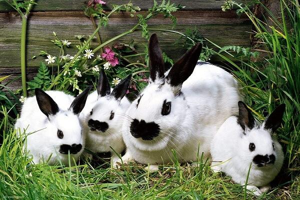Un conejo que vive en el interior tiene una vida útil más alta