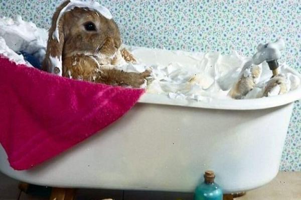 Quiero saber si los conejos se bañan