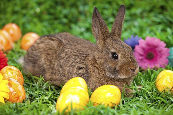 Historia del conejo de pascua católica