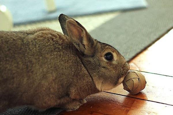 Juguetes antiestres para conejos