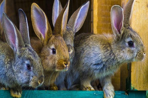 Cuáles son los juguetes antiestres para conejos