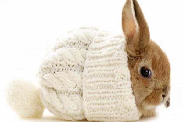 Cuidados para conejos enanos en invierno