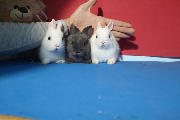¿Qué temperatura soportan los conejos en invierno?