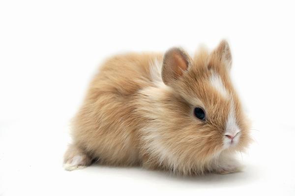 Cuanto vive el conejo teddy