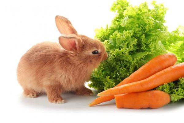 ¿Qué verduras no pueden comer los conejos?