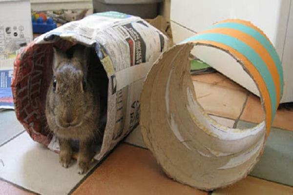 ¿Los conejos juegan?