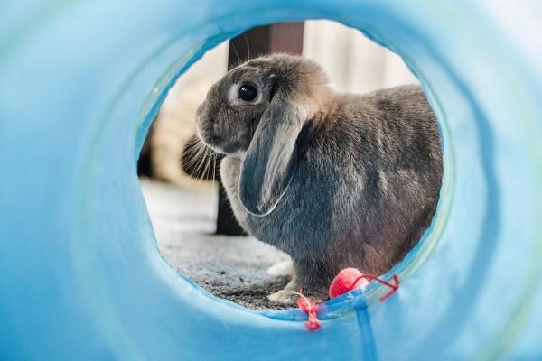 Túnel ware fun para pequeños animales
