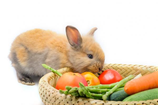 ¿Que le hace daño a los conejos?