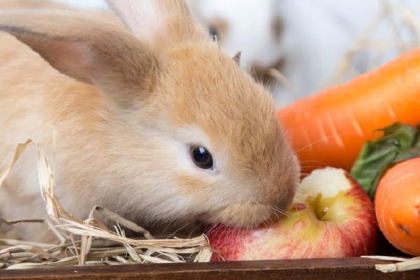 La alimentación sana del conejo