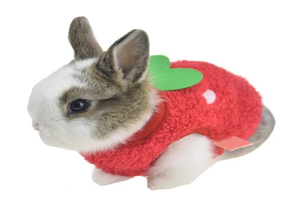 ¿Cómo abrigar a un conejo en invierno?