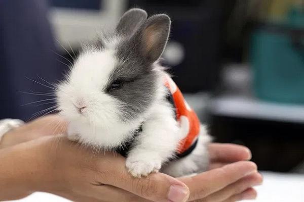 ¿Qué comen los conejos en invierno?