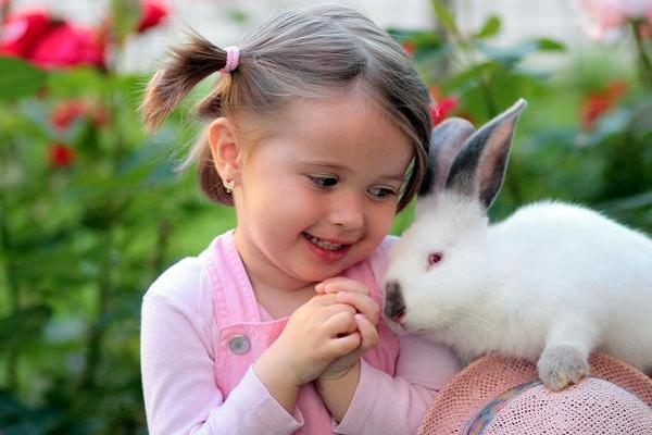 ¿Dónde comprar un conejo enano?