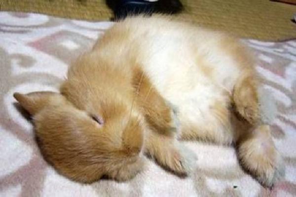 ¿Cómo invernan los conejos?