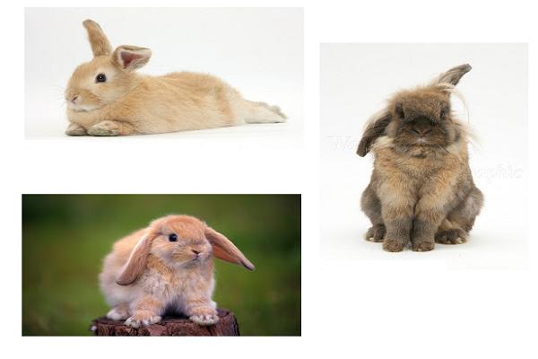 Como se comunican los conejos