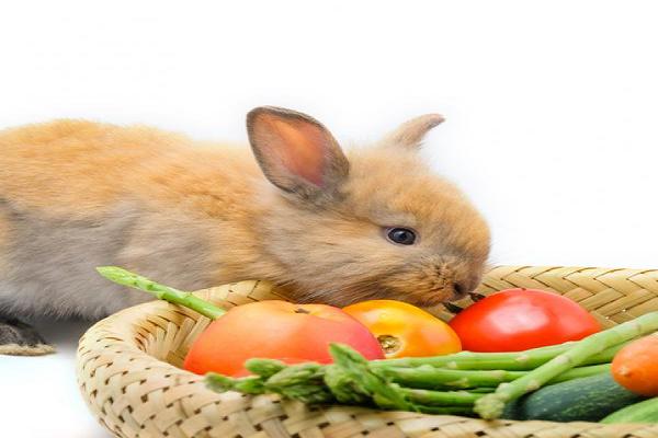 Como hacer un nido para conejos recién nacidos