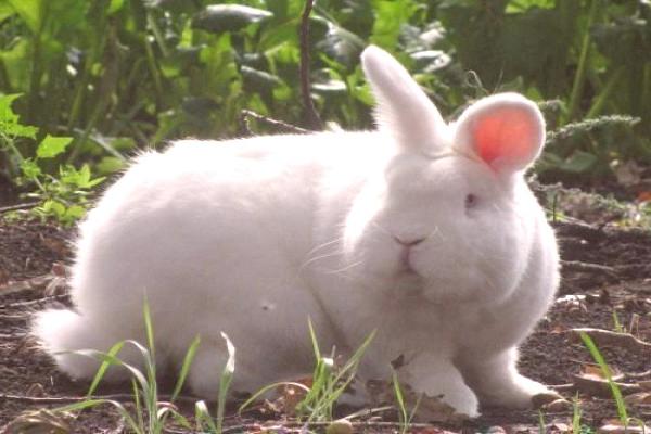 No mantener encerrado al conejo