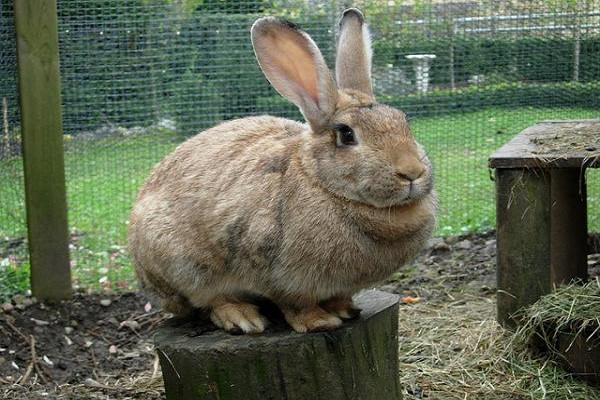 Que causa la Obesidad en los conejos