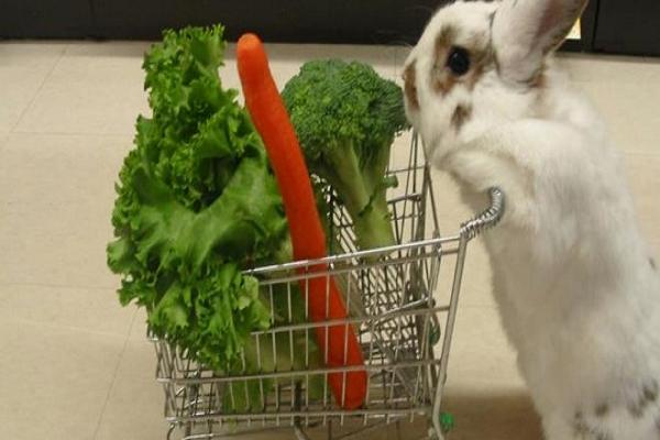 Comida para conejos bebe