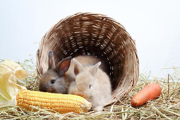 Tabla de alimentación para conejos