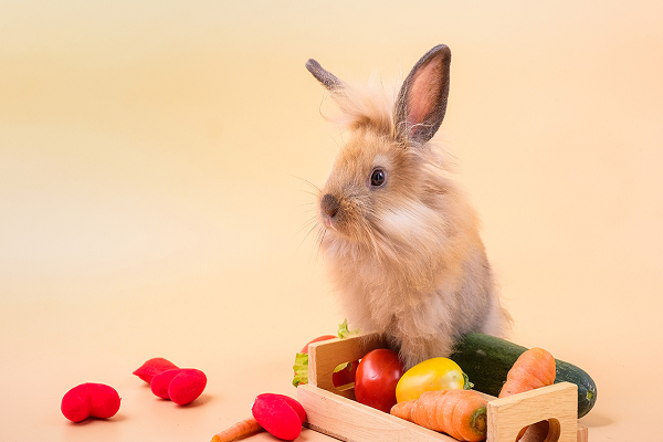 Comida para conejo bebe
