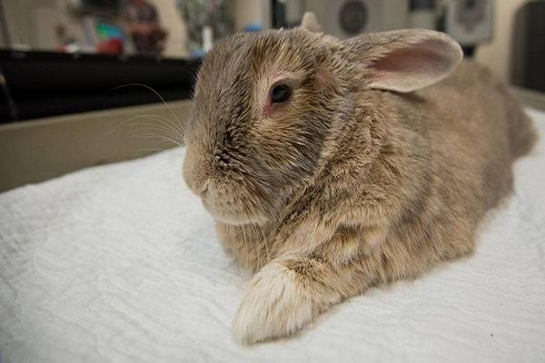 Síntomas de conejo enfermo