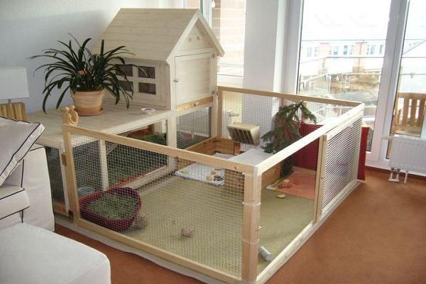 ¿Cómo tener un conejo en la casa?