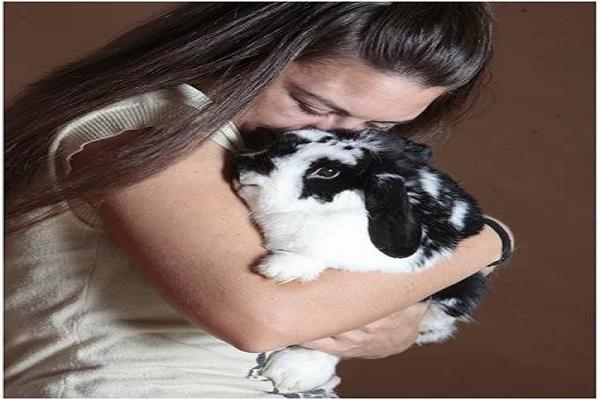 Cuidados tras esterilizar a un conejo enano