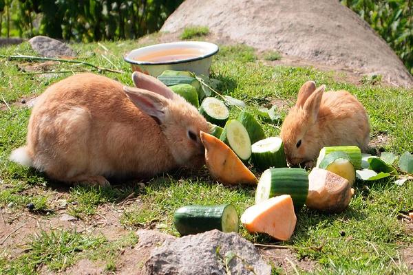 ¿Qué es lo que no pueden comer los conejos?