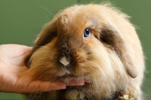 Esterilización de conejos