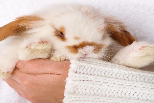En conejos que es la esterilización o castración