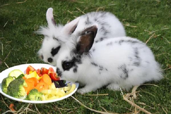 ¿Qué pasa si le das cebolla a un conejo?