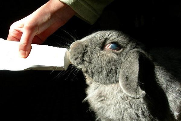 El uso de la malta para conejos