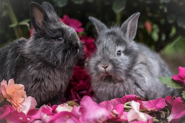 Hermoso par de conejos